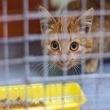 5 bonnes raisons d'adopter un chat de refuge