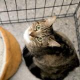 Des chats disparaissent de l'abri, quand elle comprend la vérité elle fonce voir la police