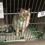 Ils entrent dans un refuge pour adopter un chat, ce que le personnel leur annonce les laisse sans voix