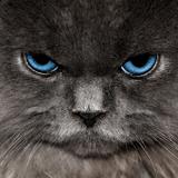15 raisons de ne jamais, Ô grand jamais, adopter un chat !