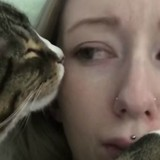 Ces chats font tout pour pourrir la vie de leurs maîtres (mais ils sont trop marrants) - Vidéo
