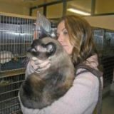 8 ans après sa disparition, un chat retrouve sa famille
