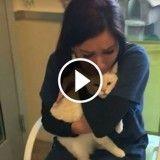 Elle retrouve son chat après deux ans et fond en larmes (Vidéo du jour)