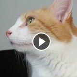 Ce chat est plus efficace que n'importe quel réveil ! (Vidéo du jour)
