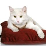La modeste vie de Gerry, le chat qui a hérité de 30 000 euros