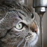Un chat ouvre un robinet... et provoque une inondation !