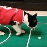 Plus fort que Ronaldo ? Ce chat est un as du foot ! (Vidéo du jour)