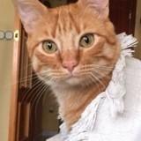 Ce chat tombe amoureux de tout le monde mais personne ne l'adopte car il a un « défaut »