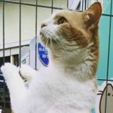Ce chat n'en peut plus d'attendre d'être adopté, alors il prend les choses en main