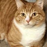 Ce chat a été abandonné à 2 reprises, la raison laisse tout le monde totalement abasourdi