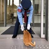 Au Japon, 2 chats tentent d'entrer dans un musée depuis des années (Photos)
