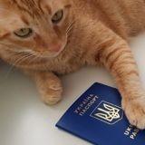 Comment obtenir un passeport pour son chat ?