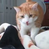 Ce chat est le cauchemar des amateurs de grasses matinées (Vidéo du jour)