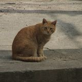 Dans l'Aude, un chien tuerait des chats sur ordre de son maître