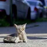 Il croise un chat dans la rue et ne peut pas s'empêcher de prendre des photos