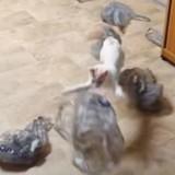 Ce chat devient dingue (mais vraiment) quand il croise des sacs plastique (Vidéo du jour)