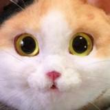 « On dirait un vrai chat » : la vérité est un peu effrayante