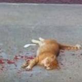 Il s'approche d'un chat ensanglanté pour lui venir en aide et réalise qu'il avait tout faux (Vidéo)