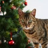 5 astuces pour préserver un sapin de Noël des assauts d'un chat