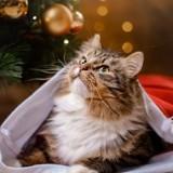 15 fantastiques cadeaux de Noël à moins de 20 euros pour votre chat !
