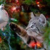 Comment éloigner un chat d'un sapin de Noël ? Voici 3 astuces qui marchent à tous les coups