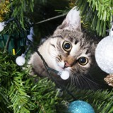 Votre chat détruit le sapin, on a trouvé la solution !