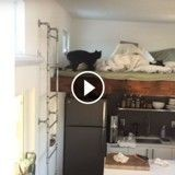 Ce chat-ninja réalise le saut de l'impossible ! (Vidéo du jour)