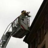 Des pompiers sauvent un chat en danger sur un toit (Photos)