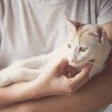Nos conseils pour bien s'occuper d'un chat âgé