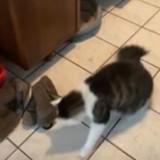 Elle voit son chat jouer avec une ombre, s'approche et pousse un hurlement de surprise