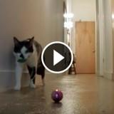 Mais que font les chats quand on n'est pas là ? (Vidéo du jour)
