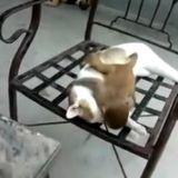 Un chat tente de faire la sieste, mais son copain le singe a d'autres projets (Vidéo du jour)