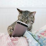 Journée internationale du chat : découvrez les 10 meilleures vidéos de chats de Tik Tok !