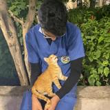 Coronavirus : un soignant exténué part faire une pause, et va trouver du réconfort auprès d'un chat errant