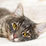 Arthrose du chat : quels traitements pour soulager la douleur ?