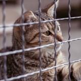 Portes ouvertes SPA : 1.684 animaux adoptés, dont une majorité de chats