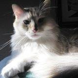 Elle reconnaît son chat perdu... à la télé !