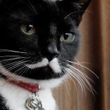 A qui ce chat vous fait-il penser ? Cette ressemblance a fait de lui une star