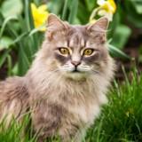 3 idées reçues sur la stérilisation du chat qu'il faut vite oublier
