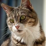 Pourquoi faire stériliser mon chat ?