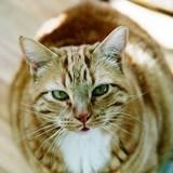 5 conseils pour faire maigrir son chat