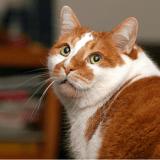 Mettre son chat au régime : les 3 règles à respecter