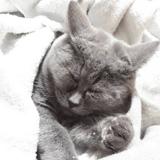 Elle trouve un chat dans son jardin et a le souffle coupé quand il ouvre les yeux (Vidéo)