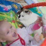 Ce chat prend les jouets du bébé pour les siens et c'est trop marrant