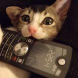 Ce chat a-t-il sauvé la vie de son maître en appelant les urgences ?