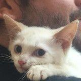 Terrifié suite à son abandon, ce chaton va totalement se transformer