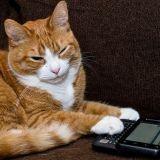 Votre chat vous enverrait-il ce genre de SMS s'il savait écrire ?