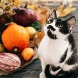 Des familles invitent des chats et chiens de refuge pour Thanksgiving !