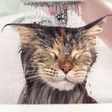 Emmener son chat chez le toiletteur : bonne ou mauvaise idée ?
