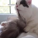 Ce chat qui fait sa toilette va vous faire craquer ! (Vidéo du jour)